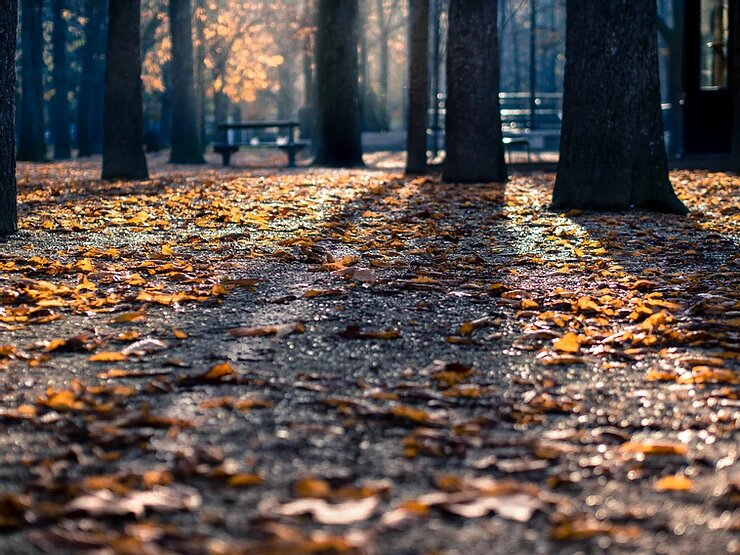 Top 5 Tips to Keep Moving in Autumn Weather